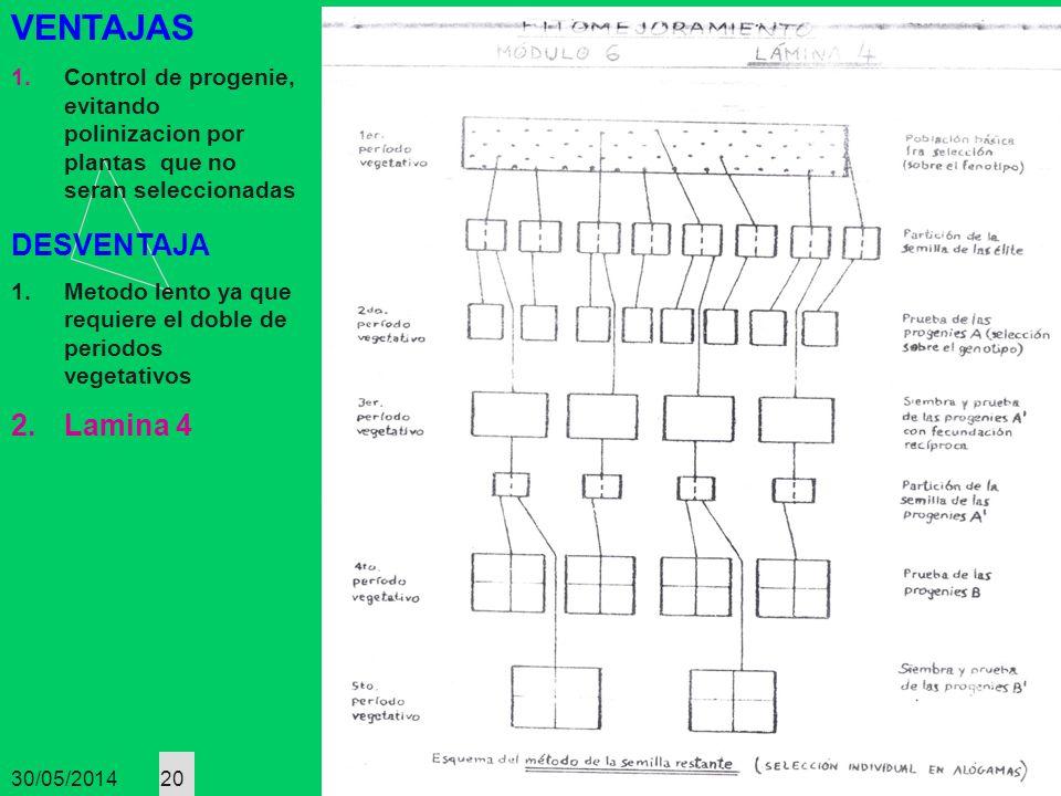 30/05/2014 20 VENTAJAS 1.Control de progenie, evitando polinizacion por plantas que no seran seleccionadas DESVENTAJA 1.Metodo lento ya que requiere e