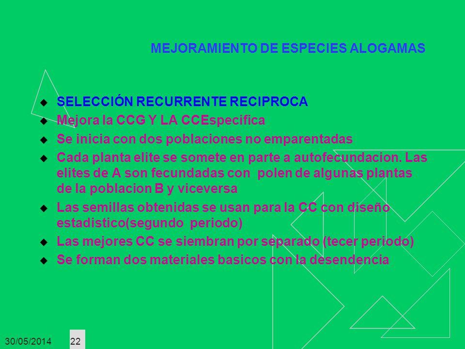 30/05/2014 22 MEJORAMIENTO DE ESPECIES ALOGAMAS SELECCIÓN RECURRENTE RECIPROCA Mejora la CCG Y LA CCEspecifica Se inicia con dos poblaciones no empare