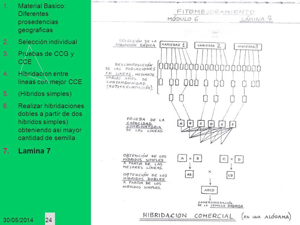 30/05/2014 24 1.Material Basico: Diferentes prosedencias geograficas 2.Selección individual 3.Pruebas de CCG y CCE 4.Hibridacion entre lineas con mejo