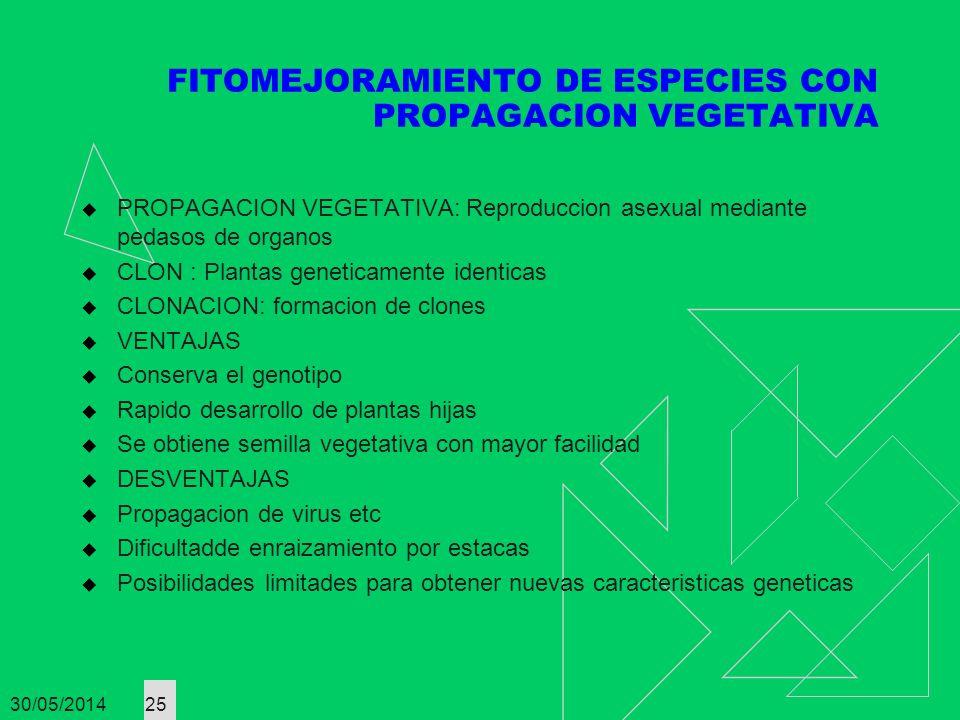 30/05/2014 25 FITOMEJORAMIENTO DE ESPECIES CON PROPAGACION VEGETATIVA PROPAGACION VEGETATIVA: Reproduccion asexual mediante pedasos de organos CLON :