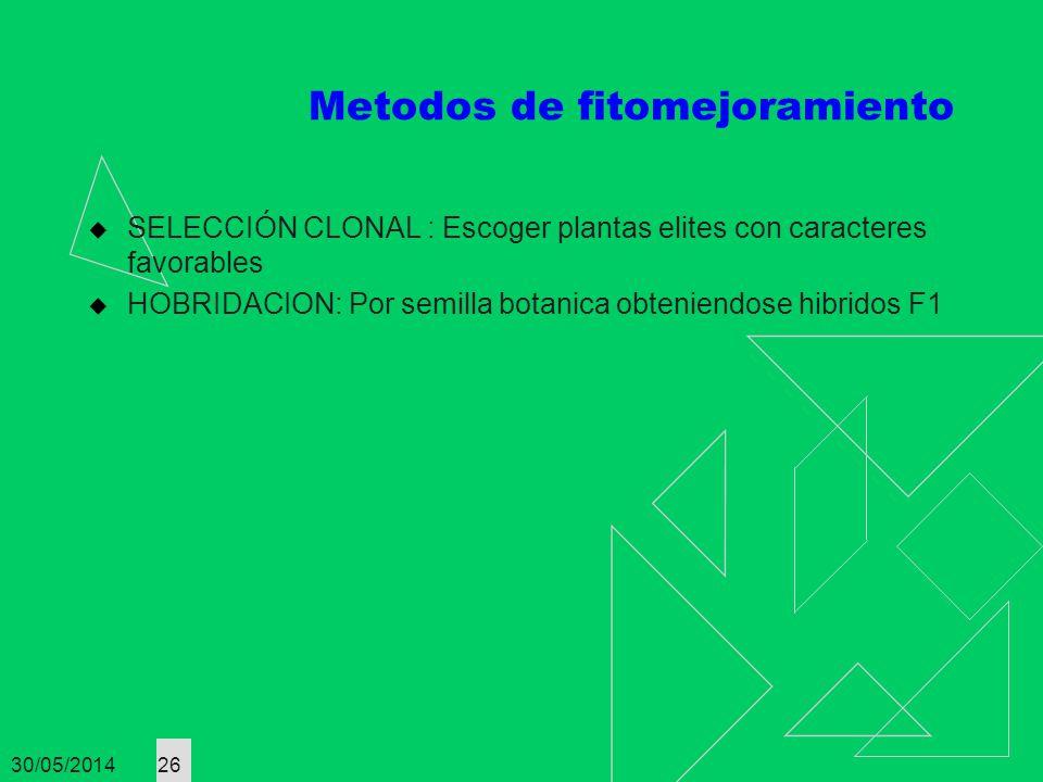 30/05/2014 26 Metodos de fitomejoramiento SELECCIÓN CLONAL : Escoger plantas elites con caracteres favorables HOBRIDACION: Por semilla botanica obteni