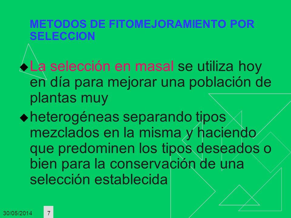 30/05/2014 7 METODOS DE FITOMEJORAMIENTO POR SELECCION La selección en masal se utiliza hoy en día para mejorar una población de plantas muy heterogén