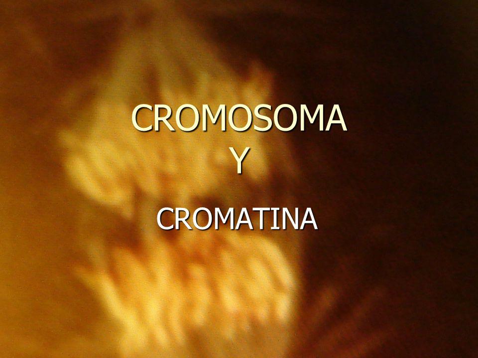 CROMOSOMA Y CROMATINA