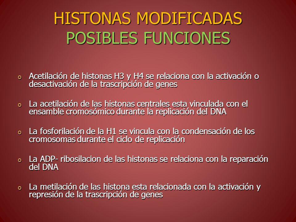 HISTONAS MODIFICADAS POSIBLES FUNCIONES o Acetilación de histonas H3 y H4 se relaciona con la activación o desactivación de la trascripción de genes o La acetilación de las histonas centrales esta vinculada con el ensamble cromosómico durante la replicación del DNA o La fosforilación de la H1 se vincula con la condensación de los cromosomas durante el ciclo de replicación o La ADP- ribosilacion de las histonas se relaciona con la reparación del DNA o La metilación de las histona esta relacionada con la activación y represión de la trascripción de genes