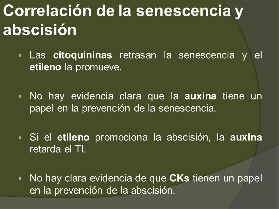 Correlación de la senescencia y abscisión Las citoquininas retrasan la senescencia y el etileno la promueve. No hay evidencia clara que la auxina tien