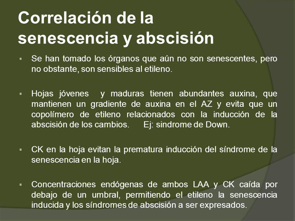 Correlación de la senescencia y abscisión Se han tomado los órganos que aún no son senescentes, pero no obstante, son sensibles al etileno. Hojas jóve