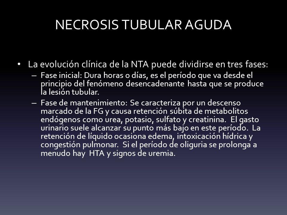 NECROSIS TUBULAR AGUDA La evolución clínica de la NTA puede dividirse en tres fases: – Fase inicial: Dura horas o días, es el período que va desde el