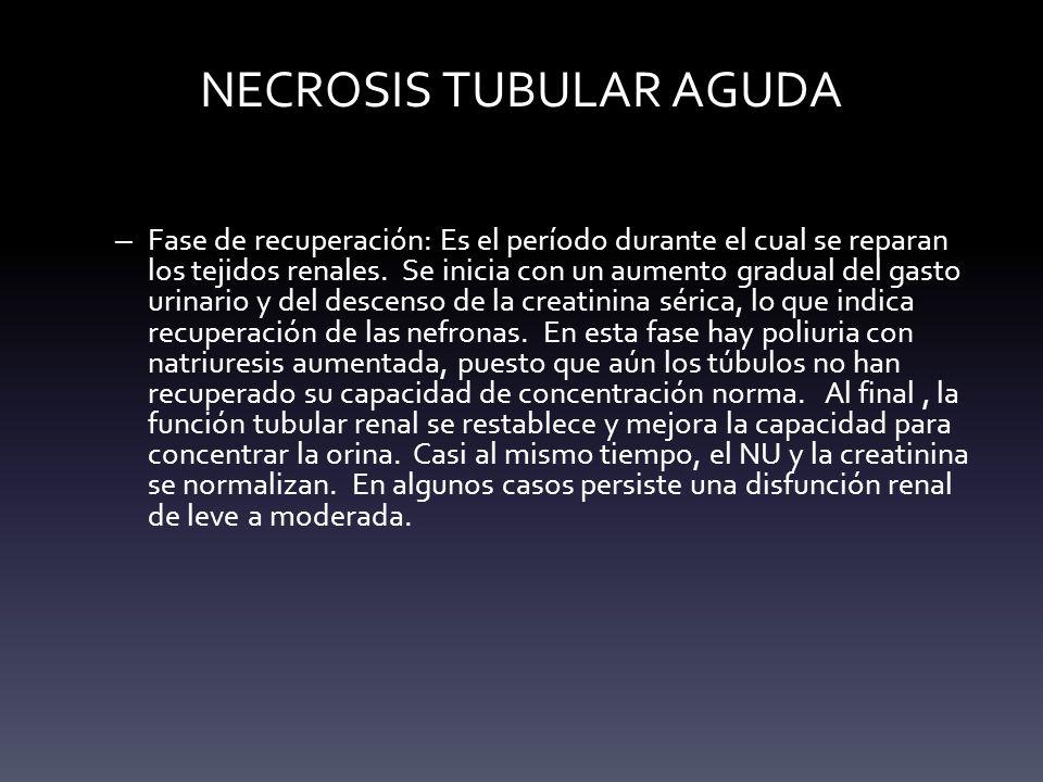 NECROSIS TUBULAR AGUDA – Fase de recuperación: Es el período durante el cual se reparan los tejidos renales. Se inicia con un aumento gradual del gast