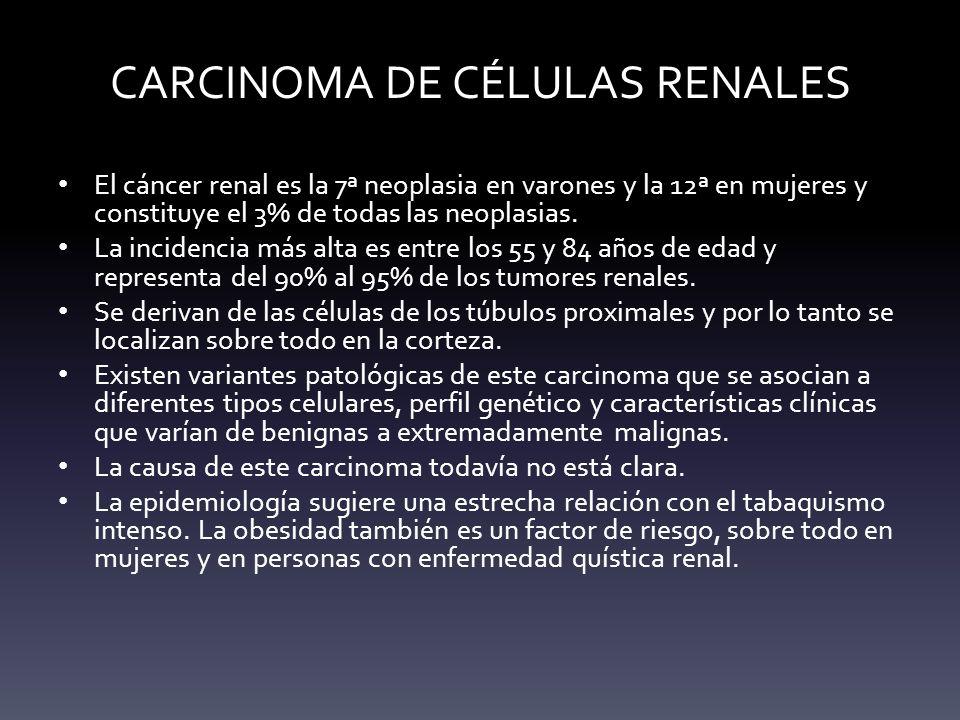 CARCINOMA DE CÉLULAS RENALES El cáncer renal es la 7ª neoplasia en varones y la 12ª en mujeres y constituye el 3% de todas las neoplasias. La incidenc