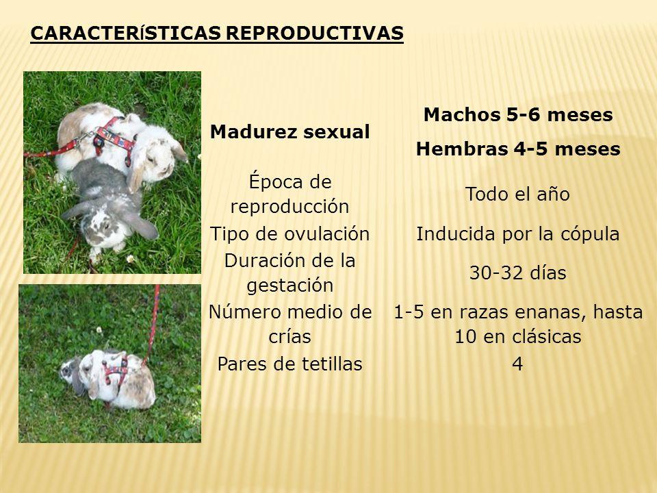 Destete Consiste en la separación de la camada y la madre. De modo natural, entre los 15 y 20 días después del nacimiento los gazapos salen del nido e