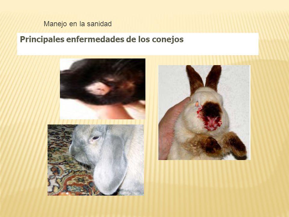 ¿Cuándo debemos alimentar al conejo? Debe hacerse al atardecer cuando la temperatura es más agradable y en las primeras horas de la mañana ejemplo 6 a
