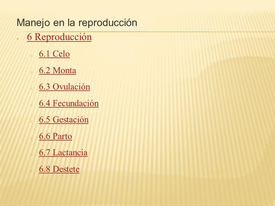 Manejo en la reproducción 6 Reproducción o 6.1 Celo 6.1 Celo o 6.2 Monta 6.2 Monta o 6.3 Ovulación 6.3 Ovulación o 6.4 Fecundación 6.4 Fecundación o 6.5 Gestación 6.5 Gestación o 6.6 Parto 6.6 Parto o 6.7 Lactancia 6.7 Lactancia o 6.8 Destete 6.8 Destete