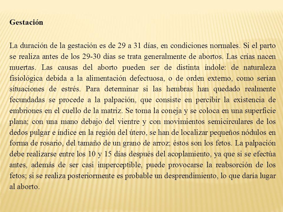 Gestación La duración de la gestación es de 29 a 31 días, en condiciones normales.