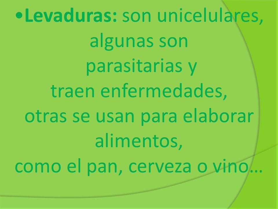 Levaduras: son unicelulares, algunas son parasitarias y traen enfermedades, otras se usan para elaborar alimentos, como el pan, cerveza o vino…