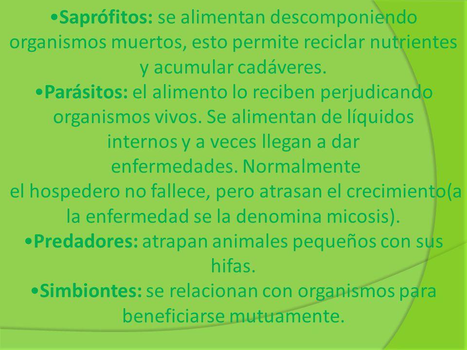 Saprófitos: se alimentan descomponiendo organismos muertos, esto permite reciclar nutrientes y acumular cadáveres. Parásitos: el alimento lo reciben p