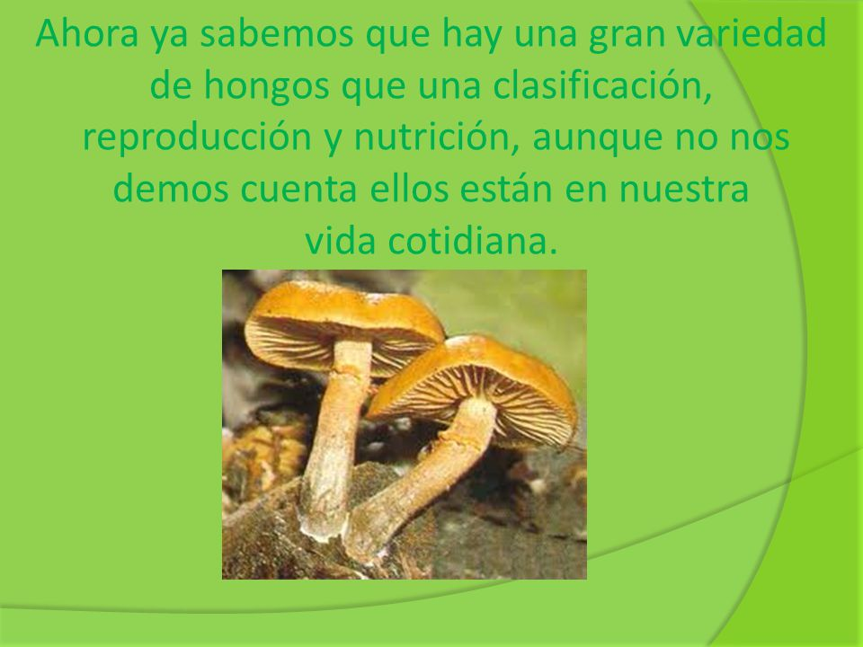 Ahora ya sabemos que hay una gran variedad de hongos que una clasificación, reproducción y nutrición, aunque no nos demos cuenta ellos están en nuestr
