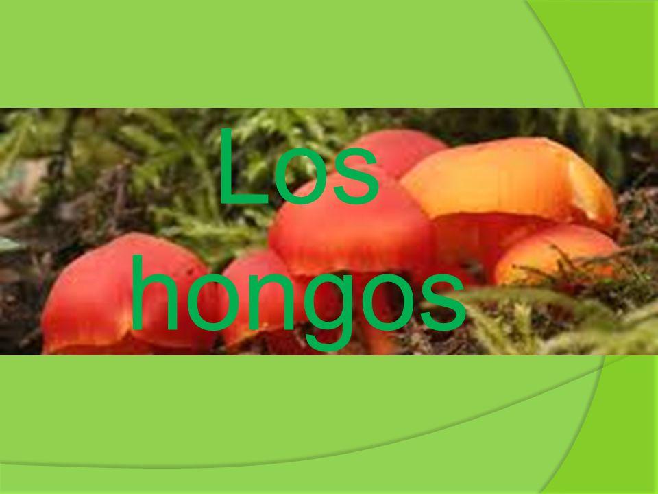 Durante mucho tiempo se creyó que los hongos eran del reino vegetal pero la verdad es que son un grupo de organismos con características muy diferentes, y fue necesario que crear un nuevo reino propio para ellos denominado Fungi.