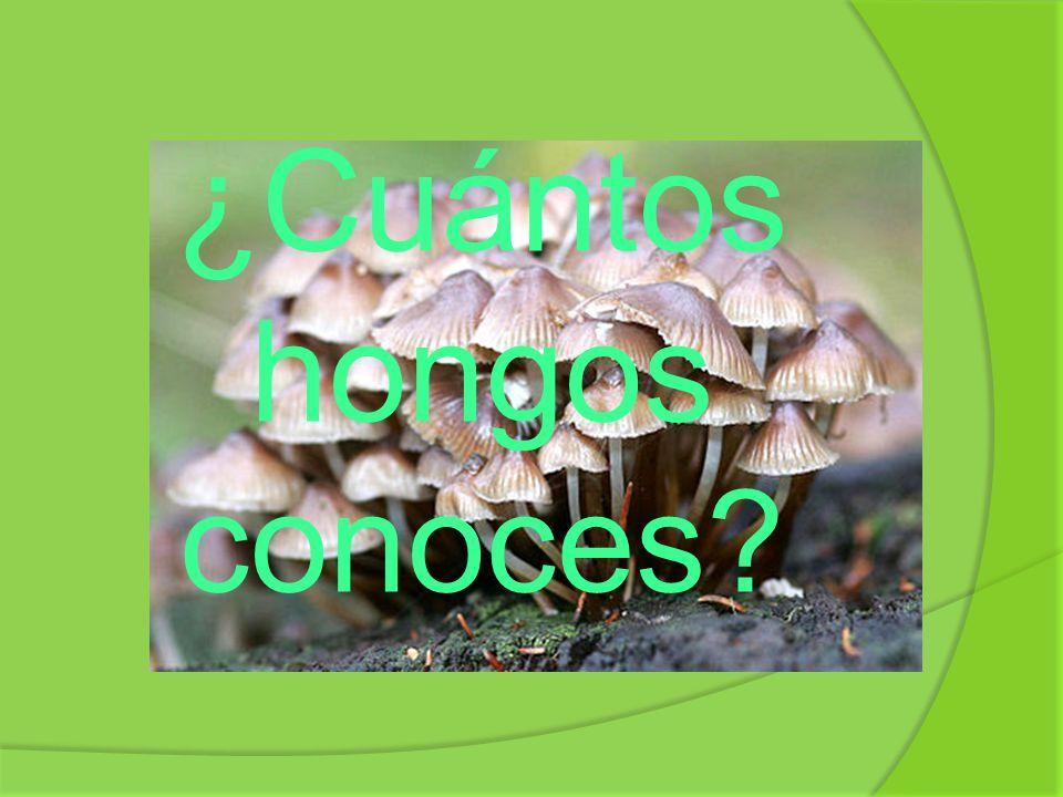 ¿Cuántos hongos conoces?