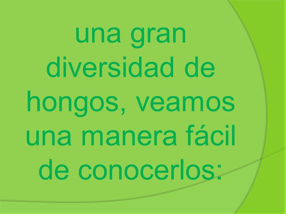 Saprófitos: se alimentan descomponiendo organismos muertos, esto permite reciclar nutrientes y acumular cadáveres.