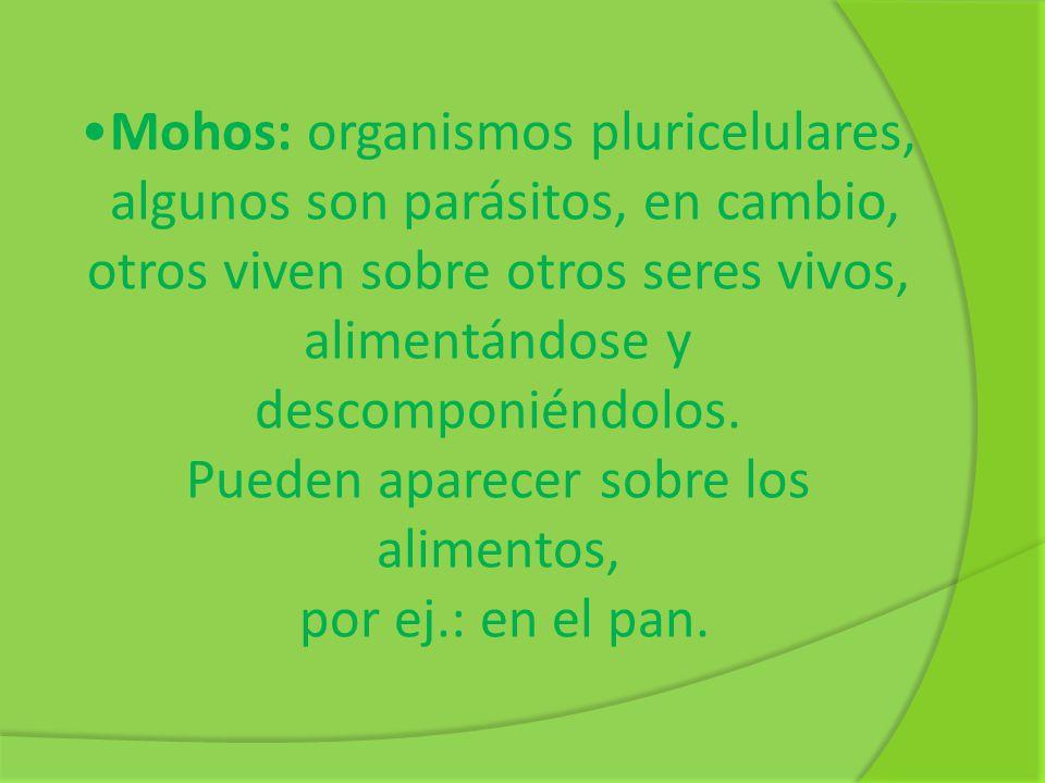 Mohos: organismos pluricelulares, algunos son parásitos, en cambio, otros viven sobre otros seres vivos, alimentándose y descomponiéndolos. Pueden apa