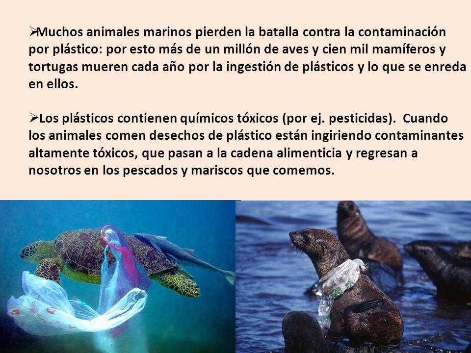 Muchos animales marinos pierden la batalla contra la contaminación por plástico: por esto más de un millón de aves y cien mil mamíferos y tortugas mue