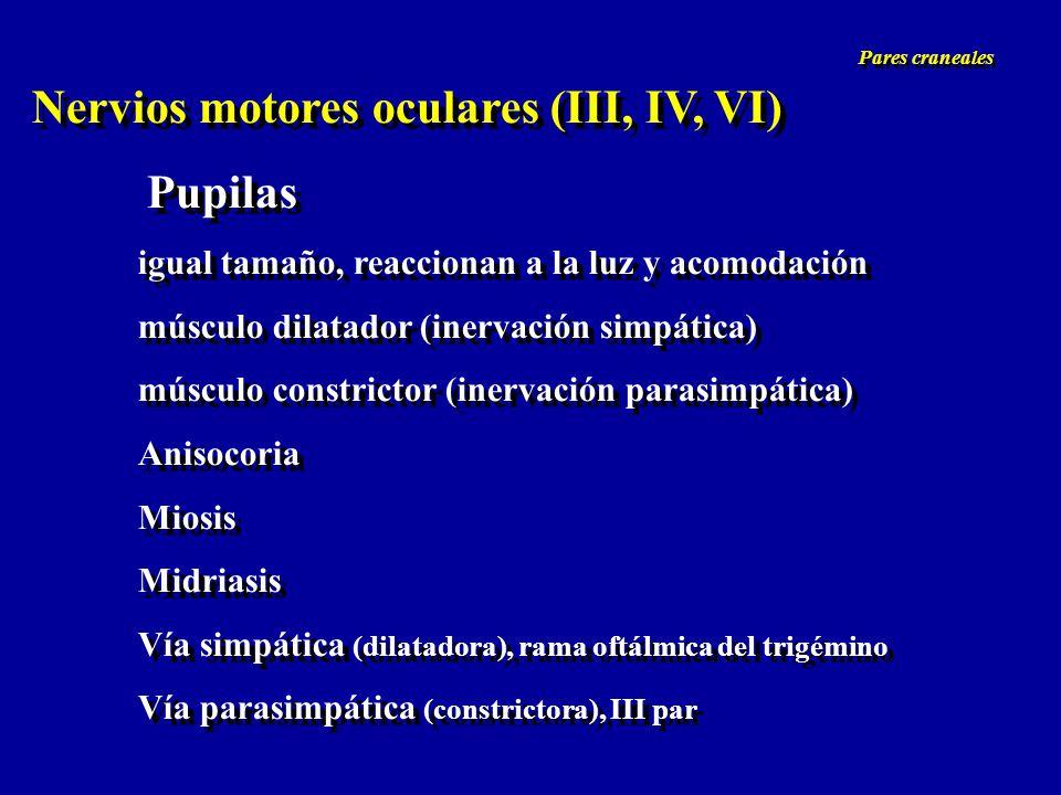 Nervios motores oculares (III, IV, VI) Pupilas igual tamaño, reaccionan a la luz y acomodación músculo dilatador (inervación simpática) músculo constr