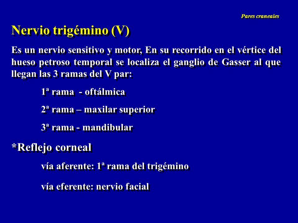 Nervio trigémino (V) Es un nervio sensitivo y motor, En su recorrido en el vértice del hueso petroso temporal se localiza el ganglio de Gasser al que