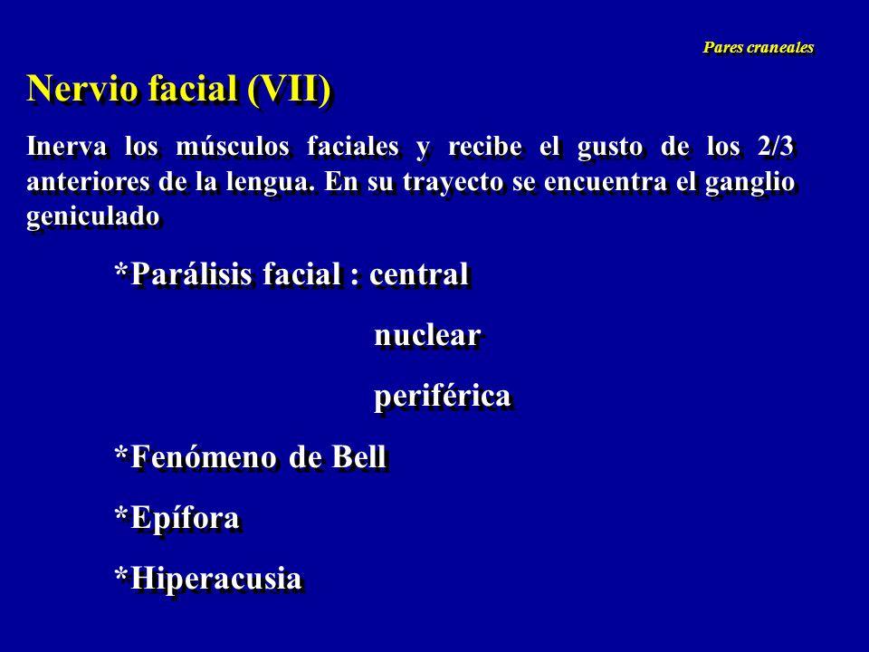 Nervio facial (VII) Inerva los músculos faciales y recibe el gusto de los 2/3 anteriores de la lengua. En su trayecto se encuentra el ganglio genicula