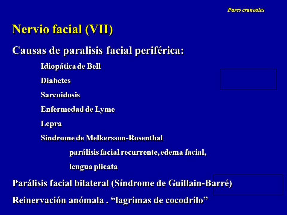Nervio facial (VII) Causas de paralisis facial periférica: Idiopática de Bell Diabetes Sarcoidosis Enfermedad de Lyme Lepra Síndrome de Melkersson-Ros