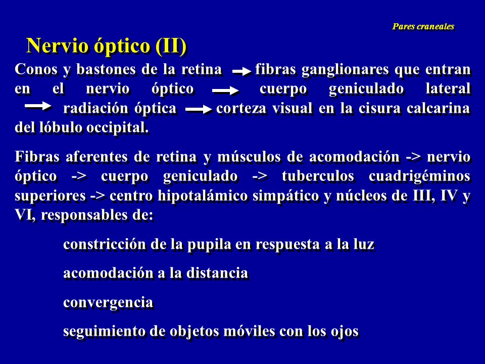 Nervio óptico (II) Agudeza visual *daltonismo (8% de los varones, herencia ligada a cromosoma X) Campos visuales *escotomas (defectos circunscritos) *hemianopsias, h.