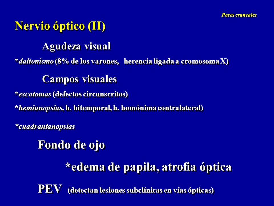 Nervios motores oculares (III, IV, VI) Pupilas igual tamaño, reaccionan a la luz y acomodación músculo dilatador (inervación simpática) músculo constrictor (inervación parasimpática) Anisocoria Miosis Midriasis Vía simpática (dilatadora), rama oftálmica del trigémino Vía parasimpática (constrictora), III par Nervios motores oculares (III, IV, VI) Pupilas igual tamaño, reaccionan a la luz y acomodación músculo dilatador (inervación simpática) músculo constrictor (inervación parasimpática) Anisocoria Miosis Midriasis Vía simpática (dilatadora), rama oftálmica del trigémino Vía parasimpática (constrictora), III par Pares craneales