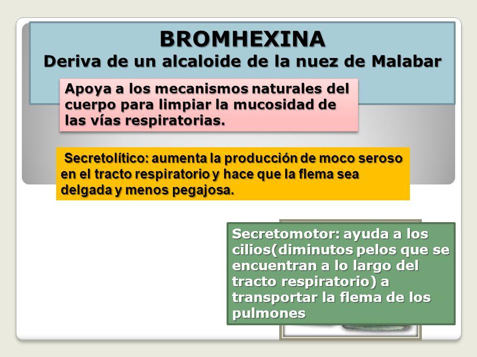BROMHEXINA Deriva de un alcaloide de la nuez de Malabar Apoya a los mecanismos naturales del cuerpo para limpiar la mucosidad de las vías respiratorias.