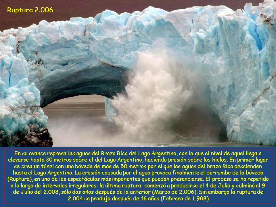 Ruptura 2.006 En su avance represa las aguas del Brazo Rico del Lago Argentino, con lo que el nivel de aquel llega a elevarse hasta 30 metros sobre el del Lago Argentino, haciendo presión sobre los hielos.