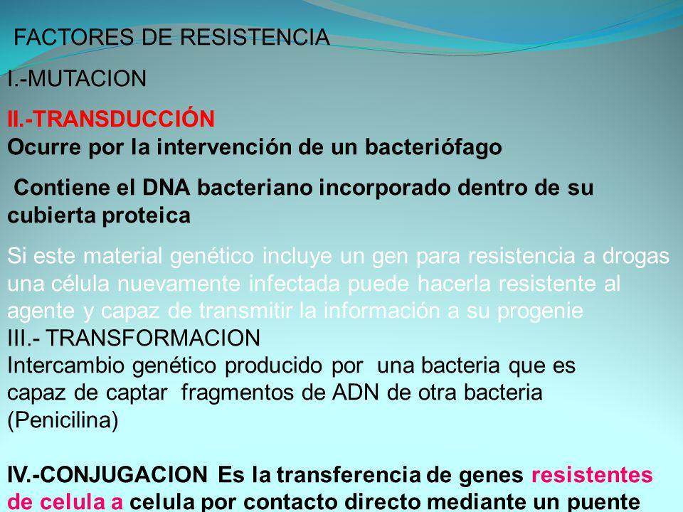 FACTORES DE RESISTENCIA I.-MUTACION II.-TRANSDUCCIÓN Ocurre por la intervención de un bacteriófago Contiene el DNA bacteriano incorporado dentro de su