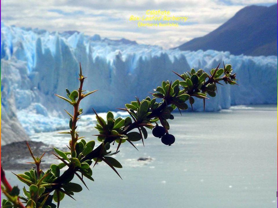 El Parque Nacional de Los Glaciares está ubicado en la provincia de Santa Cruz, Argentina, comprendiendo una superficie de 7.178 km cuadrados. Fue des