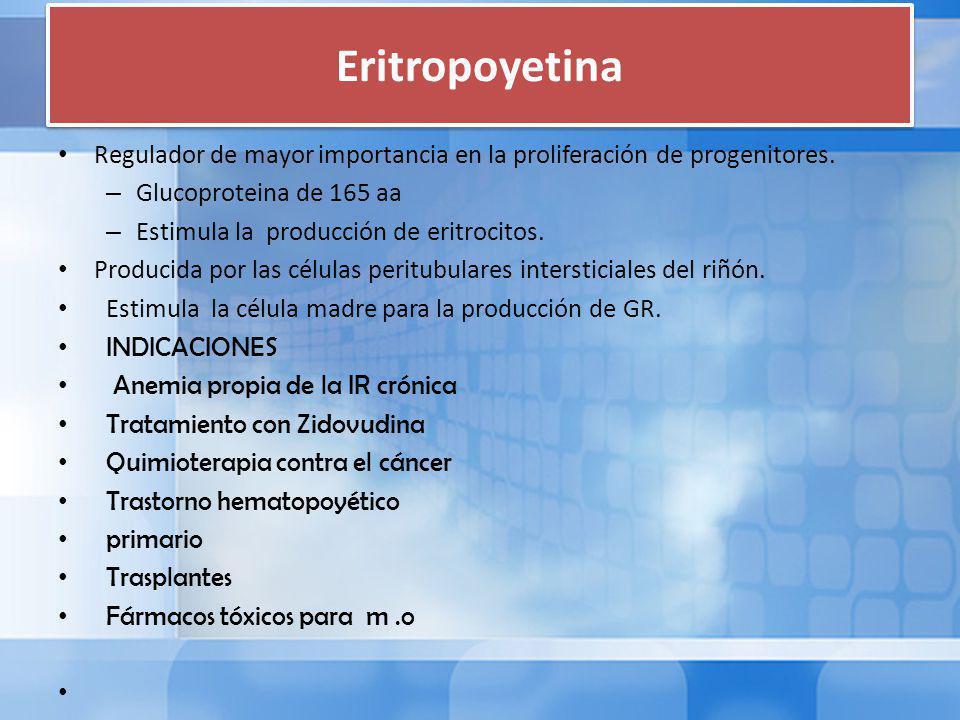 Eritropoyetina Regulador de mayor importancia en la proliferación de progenitores.