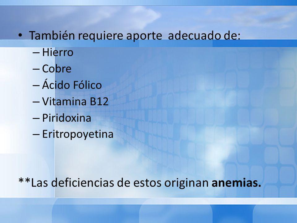 También requiere aporte adecuado de: – Hierro – Cobre – Ácido Fólico – Vitamina B12 – Piridoxina – Eritropoyetina **Las deficiencias de estos originan anemias.