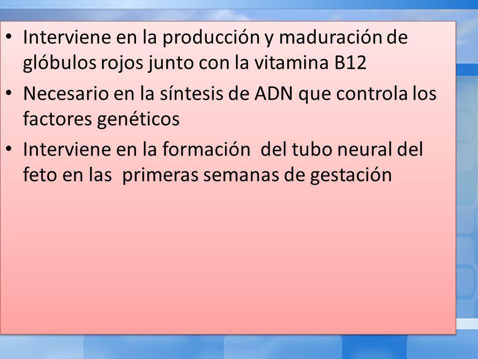 Interviene en la producción y maduración de glóbulos rojos junto con la vitamina B12 Necesario en la síntesis de ADN que controla los factores genéticos Interviene en la formación del tubo neural del feto en las primeras semanas de gestación Interviene en la producción y maduración de glóbulos rojos junto con la vitamina B12 Necesario en la síntesis de ADN que controla los factores genéticos Interviene en la formación del tubo neural del feto en las primeras semanas de gestación