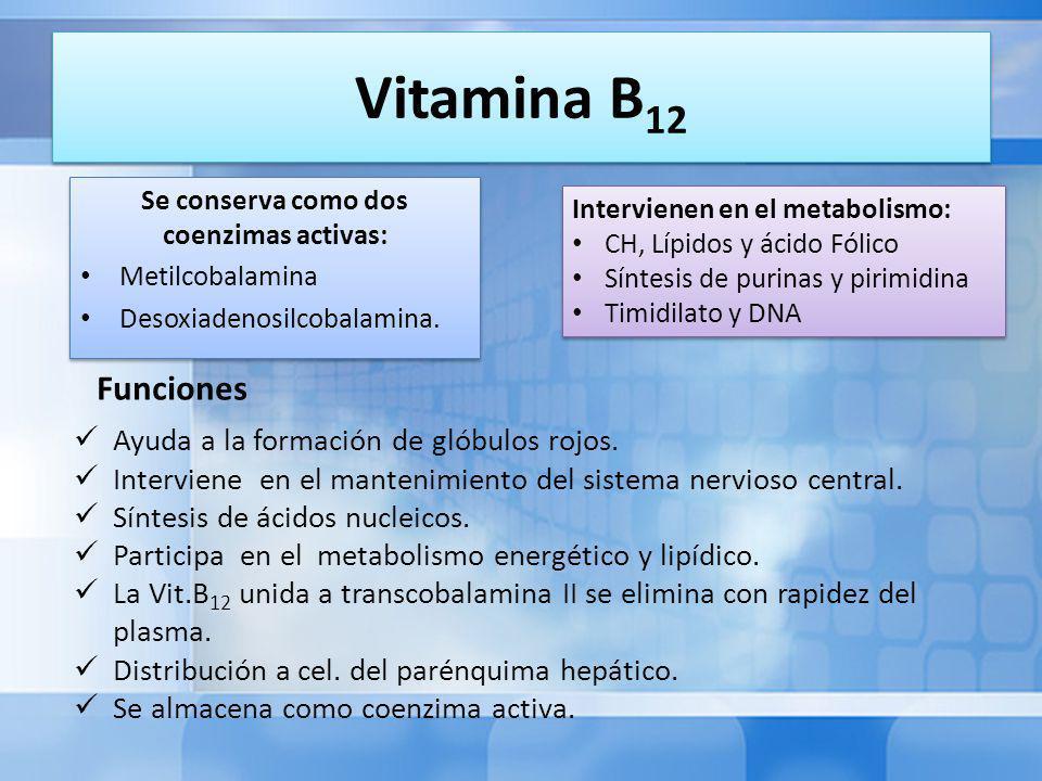 Vitamina B 12 Se conserva como dos coenzimas activas: Metilcobalamina Desoxiadenosilcobalamina.
