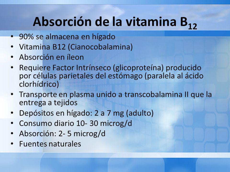 Absorción de la vitamina B 12 90% se almacena en hígado Vitamina B12 (Cianocobalamina) Absorción en íleon Requiere Factor Intrínseco (glicoproteína) producido por células parietales del estómago (paralela al ácido clorhídrico) Transporte en plasma unido a transcobalamina II que la entrega a tejidos Depósitos en hígado: 2 a 7 mg (adulto) Consumo diario 10- 30 microg/d Absorción: 2- 5 microg/d Fuentes naturales