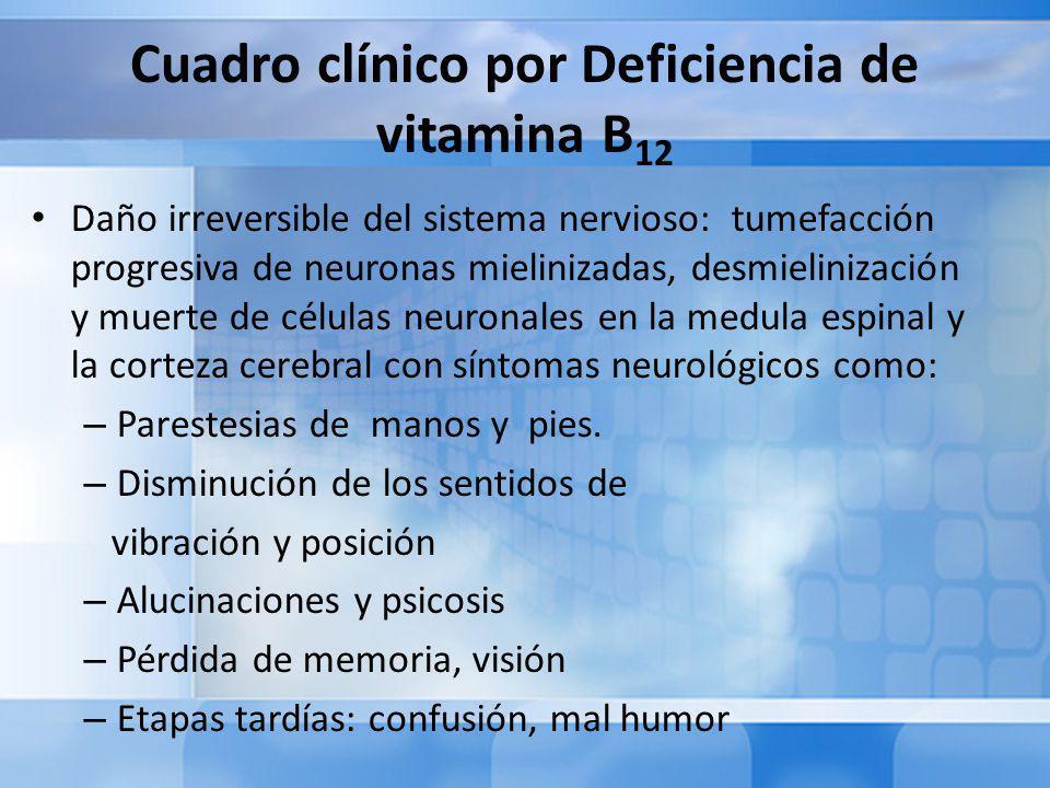 Cuadro clínico por Deficiencia de vitamina B 12 Daño irreversible del sistema nervioso: tumefacción progresiva de neuronas mielinizadas, desmielinización y muerte de células neuronales en la medula espinal y la corteza cerebral con síntomas neurológicos como: – Parestesias de manos y pies.