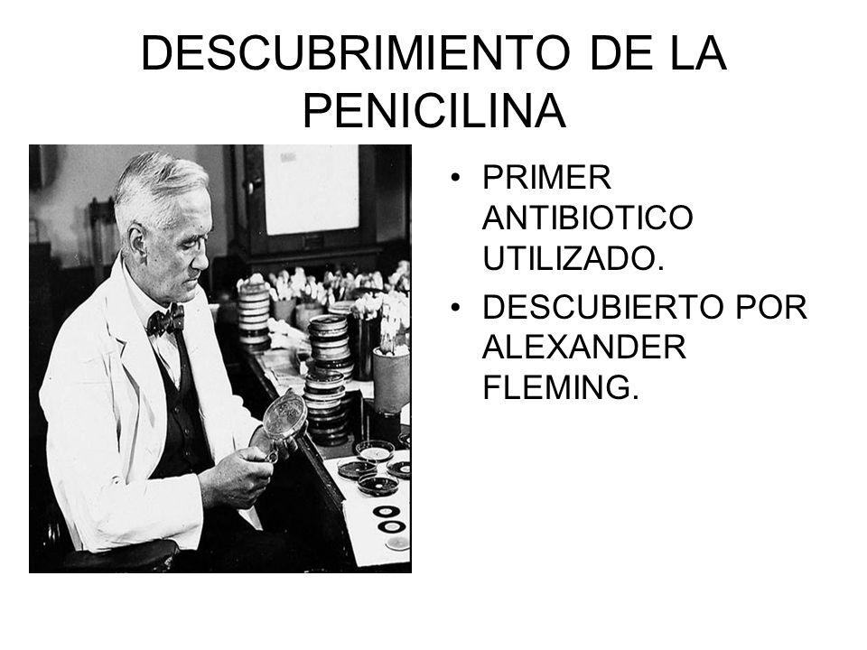 DESCUBRIMIENTO DE LA PENICILINA PRIMER ANTIBIOTICO UTILIZADO. DESCUBIERTO POR ALEXANDER FLEMING.