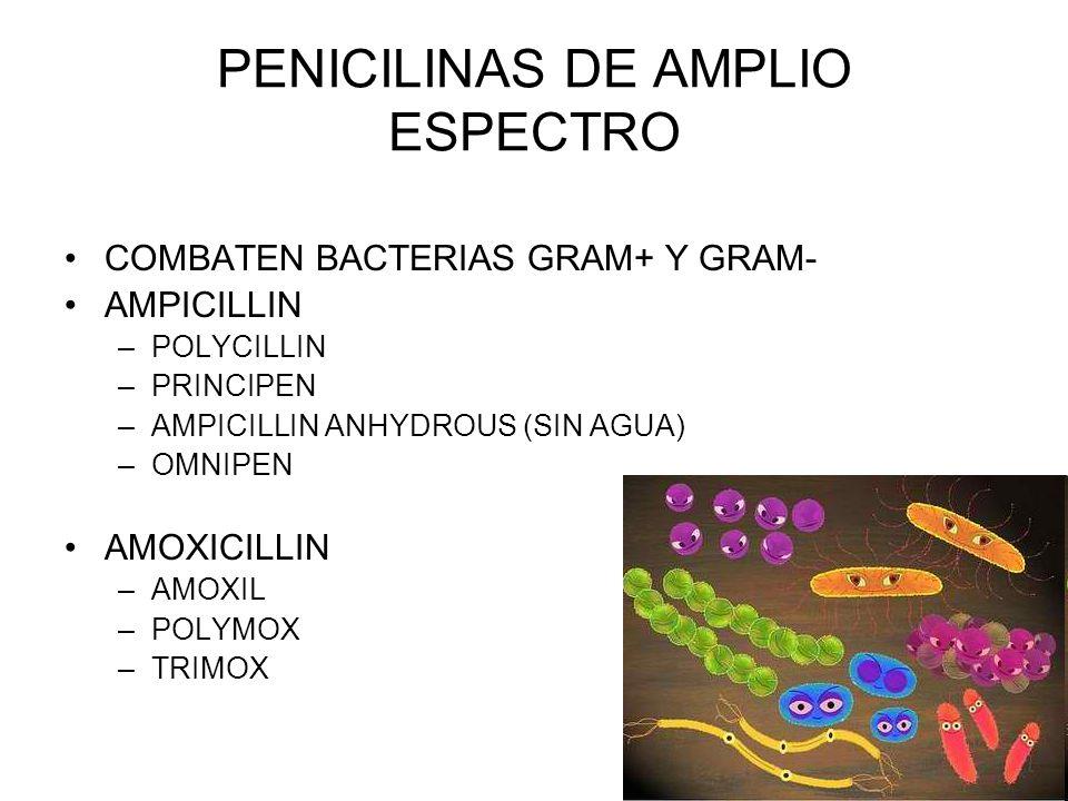 PENICILINAS DE AMPLIO ESPECTRO COMBATEN BACTERIAS GRAM+ Y GRAM- AMPICILLIN –POLYCILLIN –PRINCIPEN –AMPICILLIN ANHYDROUS (SIN AGUA) –OMNIPEN AMOXICILLI