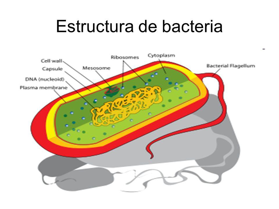 Estructura de bacteria