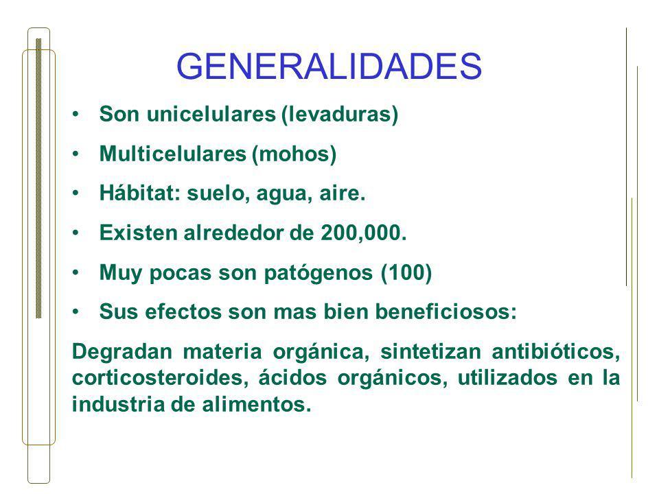 GENERALIDADES Son unicelulares (levaduras) Multicelulares (mohos) Hábitat: suelo, agua, aire. Existen alrededor de 200,000. Muy pocas son patógenos (1