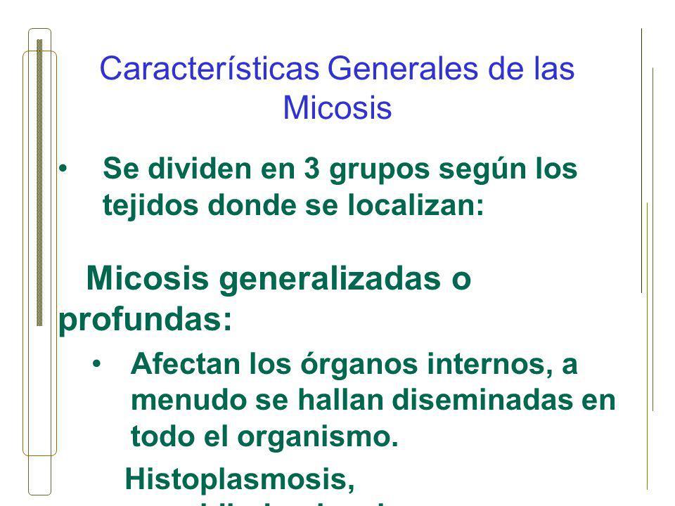 Características Generales de las Micosis Se dividen en 3 grupos según los tejidos donde se localizan: Micosis generalizadas o profundas: Afectan los ó