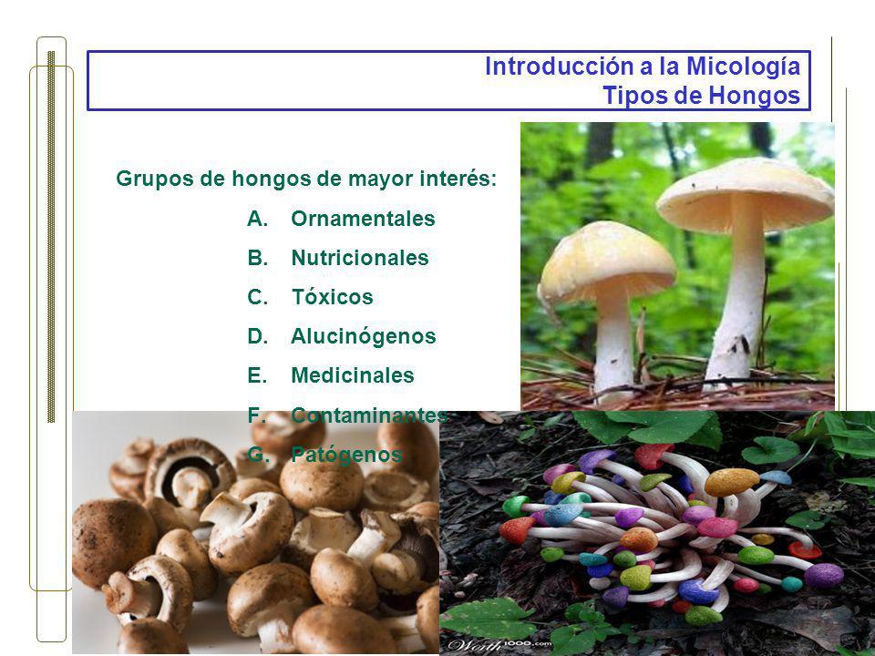Introducción a la Micología Tipos de Hongos Grupos de hongos de mayor interés: A.Ornamentales B.Nutricionales C.Tóxicos D.Alucinógenos E.Medicinales F