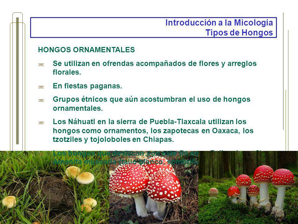 Introducción a la Micología Tipos de Hongos HONGOS ORNAMENTALES Se utilizan en ofrendas acompañados de flores y arreglos florales. En fiestas paganas.