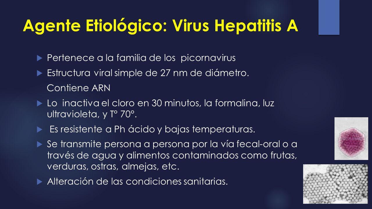 Agente Etiológico: Virus Hepatitis A Pertenece a la familia de los picornavirus Estructura viral simple de 27 nm de diámetro. Contiene ARN Lo inactiva