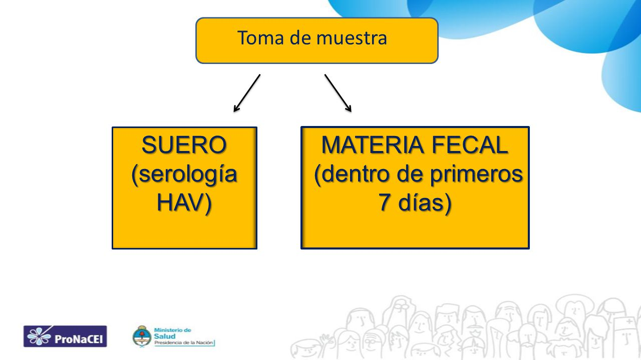 SUERO (serología HAV) MATERIA FECAL (dentro de primeros 7 días) (dentro de primeros 7 días) Toma de muestra
